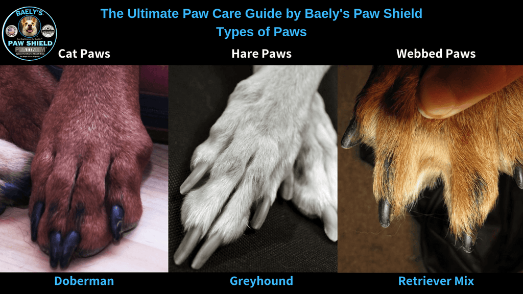 The Ultimate Paw Care Guide - Types of Paws