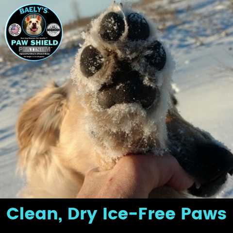 Clean Dry Ice-Free Paws with Baely's Paw Shield
