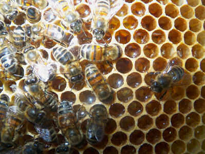Photo of a Beeswax Factory