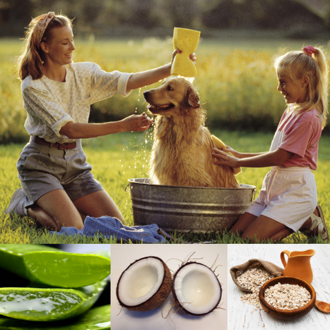Image of Natural Dog Shampoo and Dog Conditioner with Aloe Bundle by Baely's Groomer's Secret