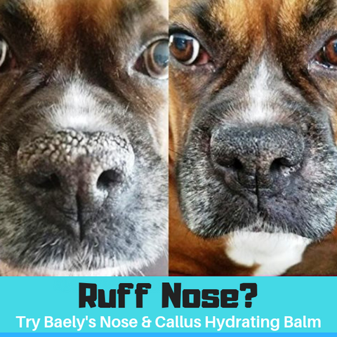 Image of Baely's Paw Shield Dog Paw Balm and Baely's Nose & Callus Balm Bundle