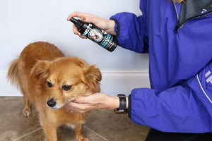 Natural Dog Cologne & Dog Coat Conditioner Spray - Detangles Deodorizes for a Shiny Healthy Coat