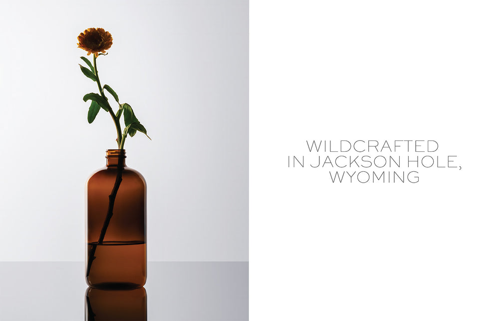 Wildcrafted in Jackson Hole