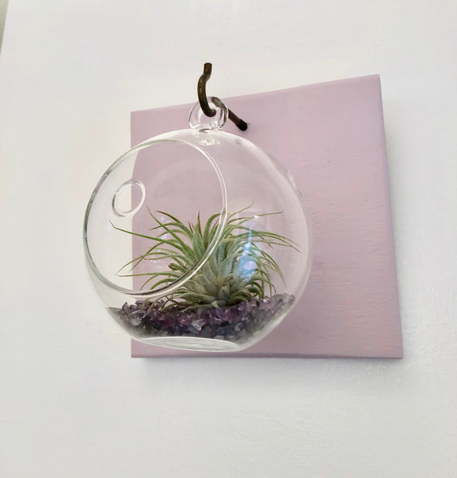 Short Board Air Plant Terrarium Set