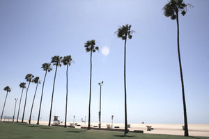 Palmtrees in Newport Beach photo