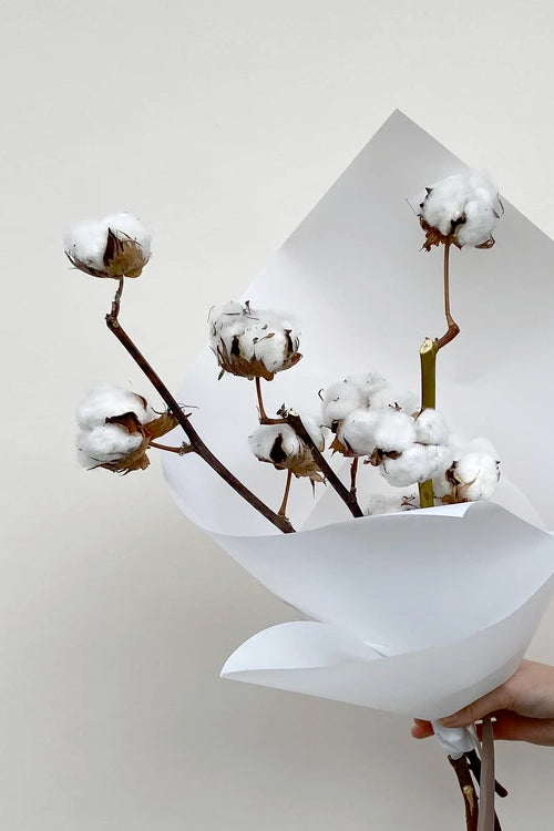 Cotton Bundle - Vancouver Dried Flowers