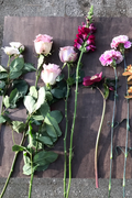 STEMS - DESIGNER'S BUNCH - Delivered Wednesdays (Subscription)