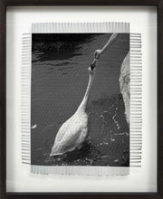 Load image into Gallery viewer, FEEDING SWAN - WOVEN PHOTOGRAPH