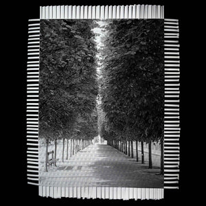 LINED TREES - WOVEN PHOTOGRAPH