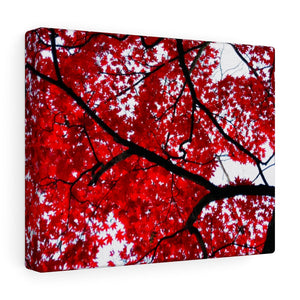 Japanese Maple Canvas- Various Sizes