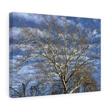 Load image into Gallery viewer, Sycamore Tree Unframed Canvas - Various Sizes