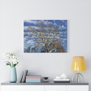 Sycamore Tree Unframed Canvas - Various Sizes