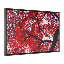 Load image into Gallery viewer, Japanese Maple Framed Canvas-Various Sizes