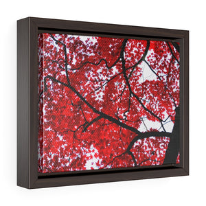 Japanese Maple Framed Canvas-Various Sizes