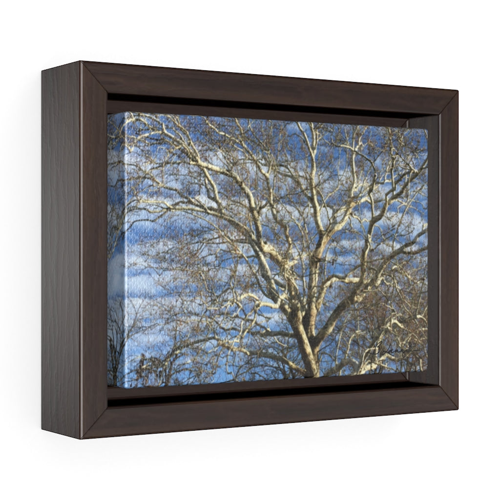 Sycamore Tree 7x5 Framed Canvas