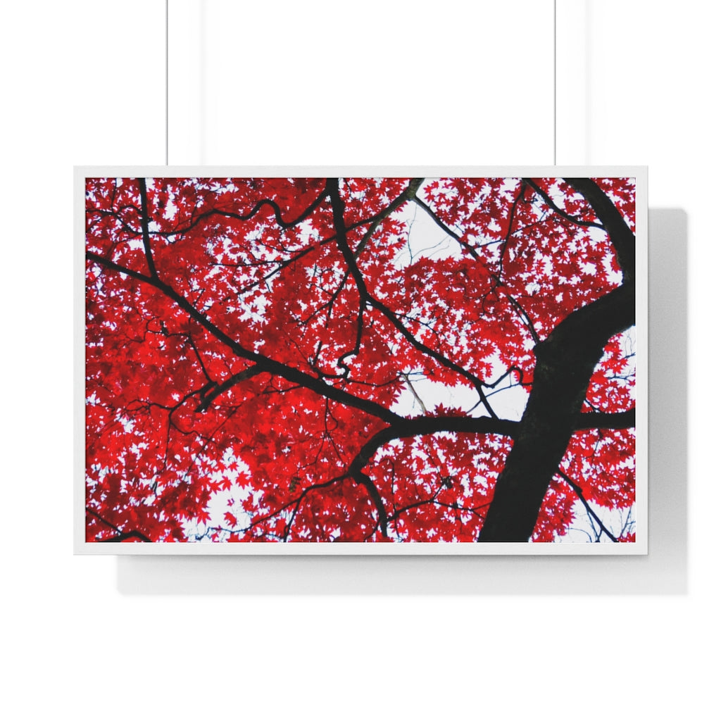 Japanese Maple  Framed Print- Various Sizes