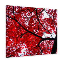 Load image into Gallery viewer, Japanese Maple Canvas- Various Sizes