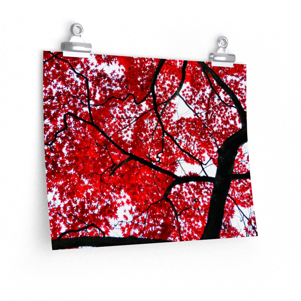Japanese Maple Print- Various Sizes