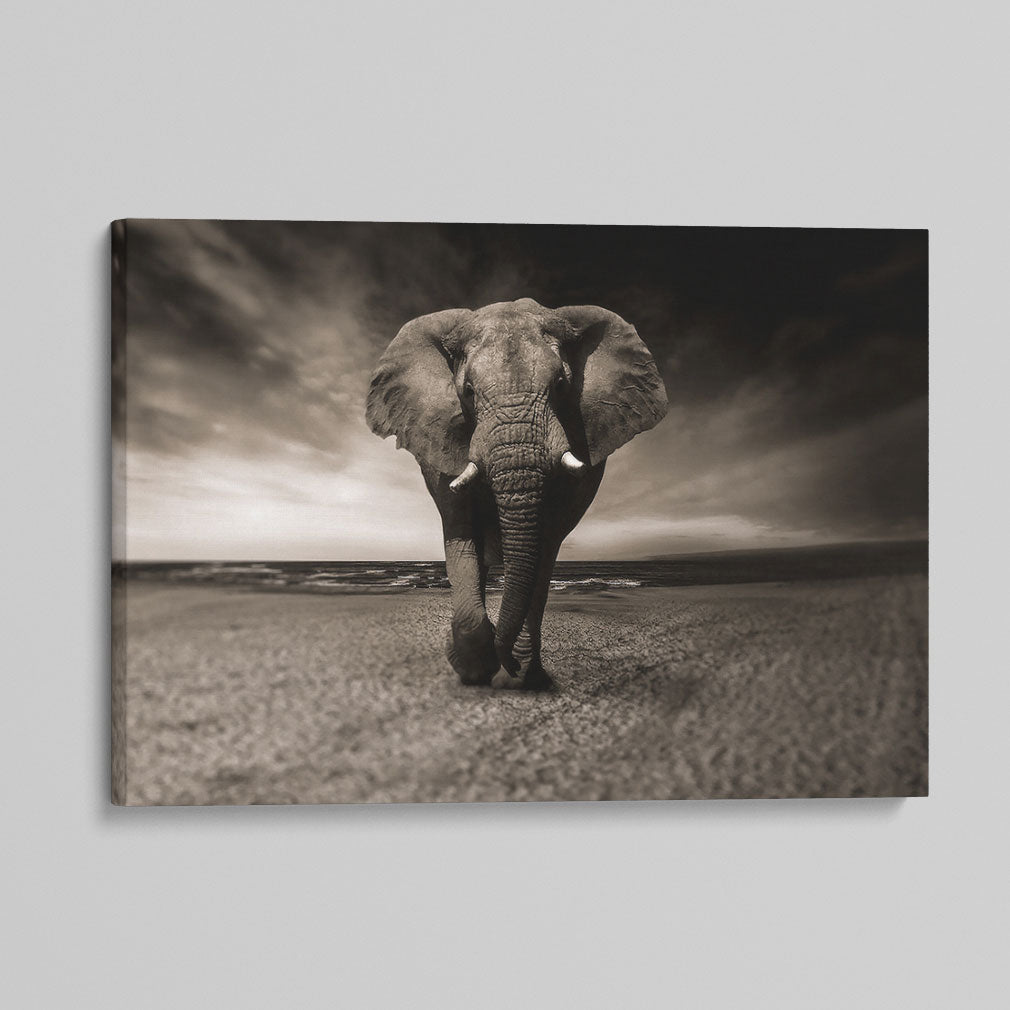 African Elephant Canvas