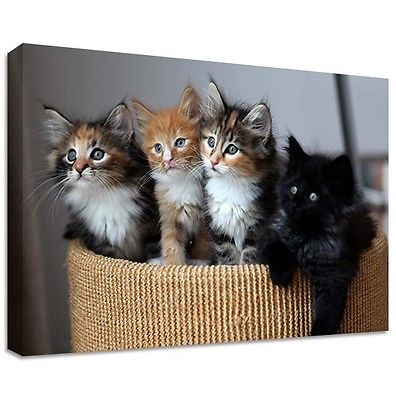 4 Kittens Canvas print