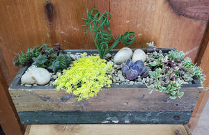 Rectangular Wood Trough Succulent Garden - Large