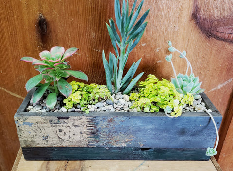 Rectangular Wood Trough Succulent Garden - Small