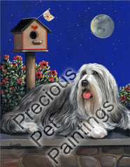 Bearded Collie Moonshine-CO