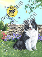 Border Collie Xing-GF