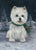 West Highland Terrier Snow Bunny-PZ