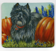 Cairn Terrier Autumn-MP