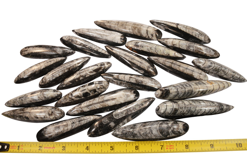 1 real large size polished fossil orthoceras Almost 8 inches long.