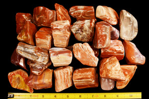 "Petrified Wood 2"" Root Chakra - Kidz Rocks"