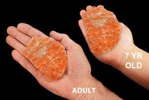 "Orange Calcite Slice 3"" 5-6 Oz Slab Sacral Chakra - Kidz Rocks"