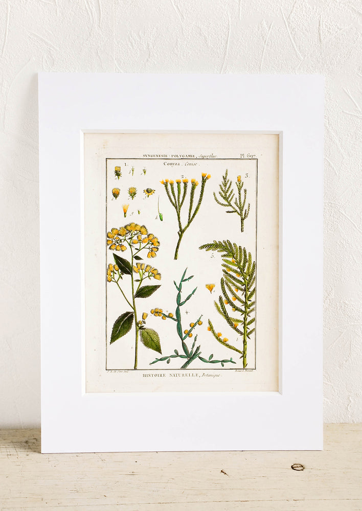 2: Vintage botanical print with white mat. Print features green and yellow leaves and flowers.