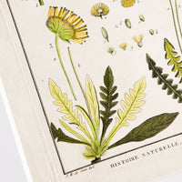 2: Vintage botanical artwork in white mat