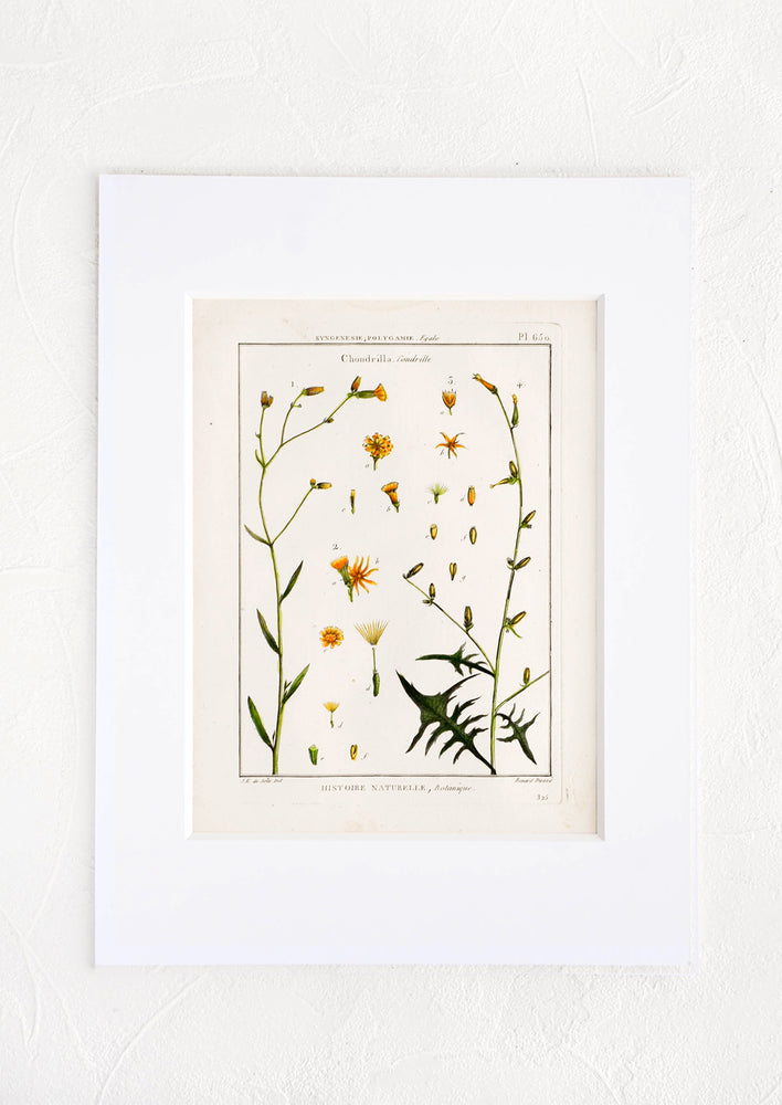 1: Vintage botanical print with white mat. Print features green and orange leaves and flowers.