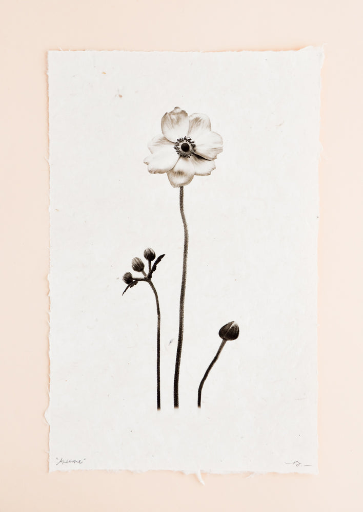 1: Anemone Form Sepia Print in  - LEIF