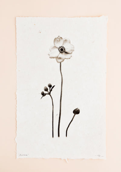 Anemone Form Sepia Print in  - LEIF