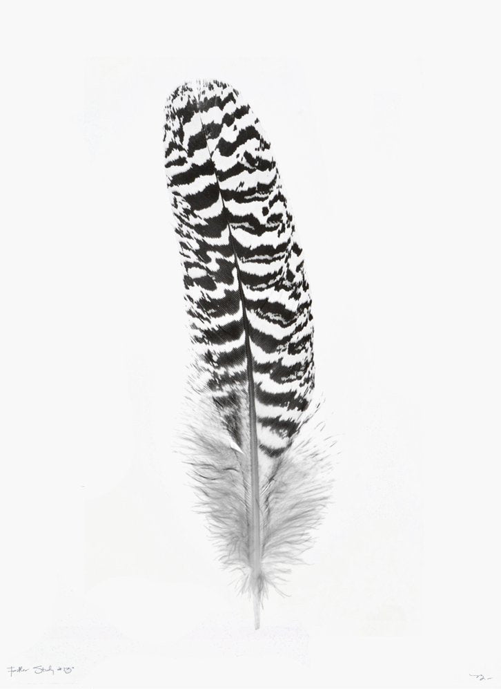 1: Feather Study #13 Print in  - LEIF