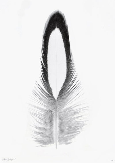 Feather Study #14 Print