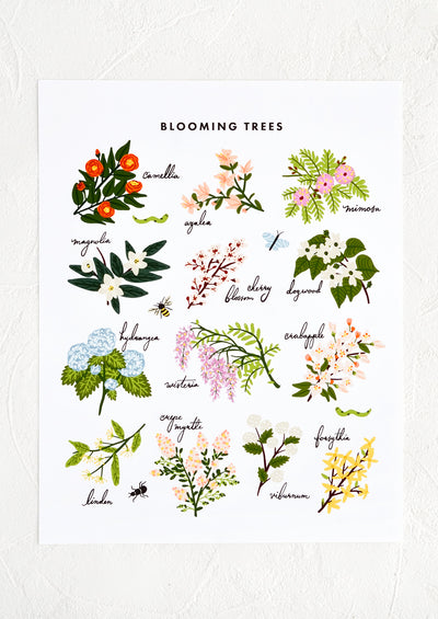 An art print with illustrations of types of flowering trees and their names.