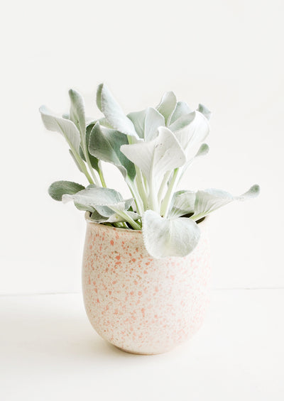 Blush Splatters Planter