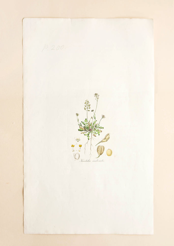 1: Botanical Magazine Print #200 in  - LEIF