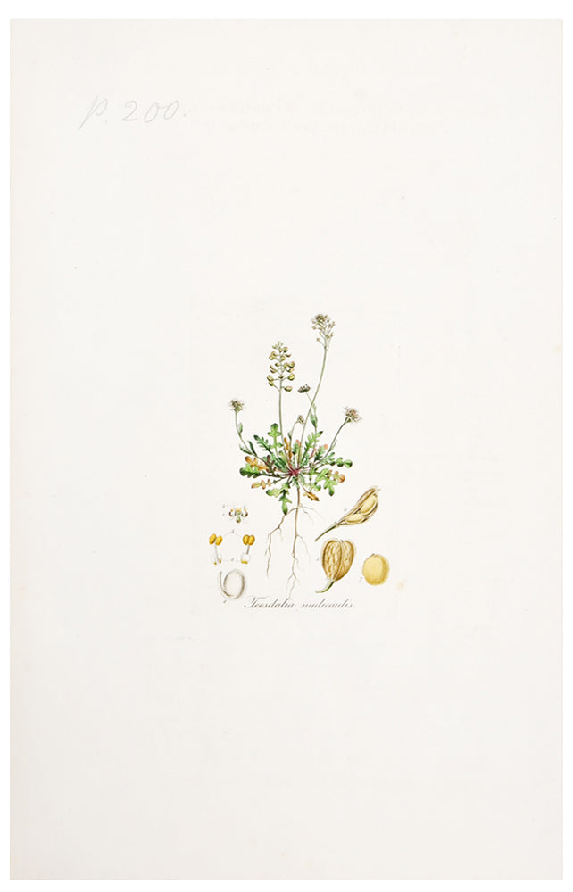2: Botanical Magazine Print #200 in  - LEIF