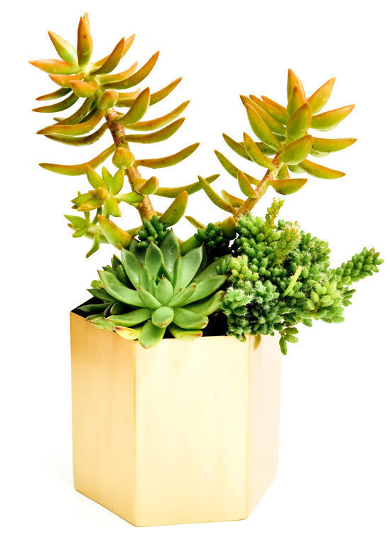 Brass Hexagon Planter