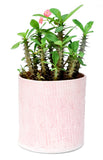 Cable Knit Planter - LEIF