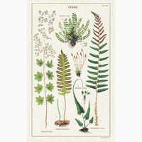 2: A cotton tea towel with botanical fern species printed in color.