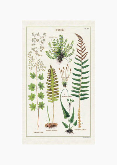 Fern Species Tea Towel hover
