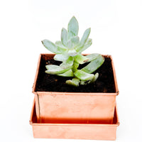Copper Patina Planter - LEIF