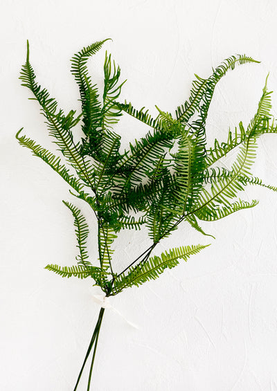 Preserved, dried fern fronds in decorative bundle wrapped with string